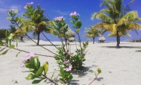 Beach Lot for sale at Playa Vida Honduras